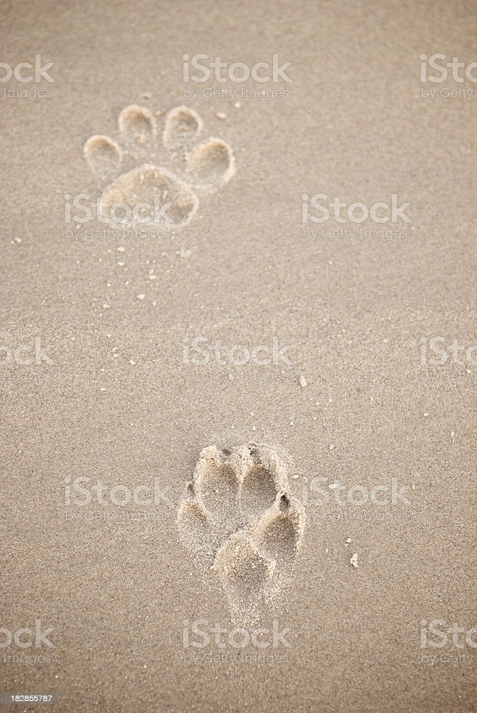 Two Paw Prints in Golden Brown Sand stock photo