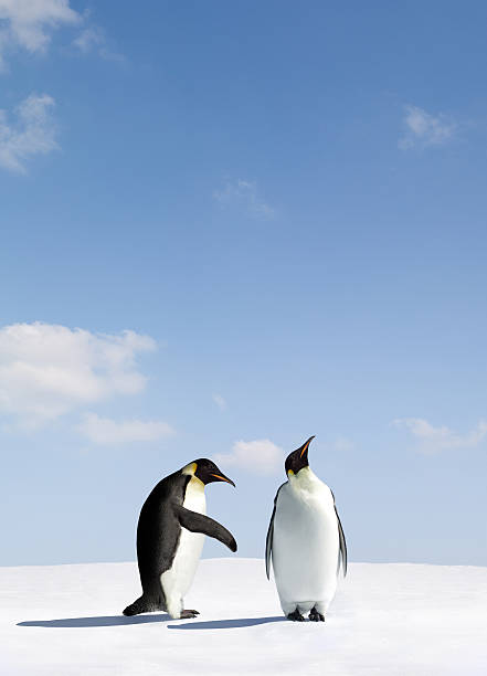 Two penguins depicting rejection stock photo