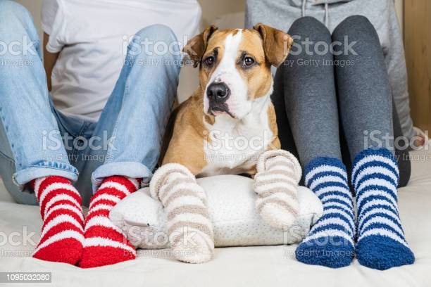 Two people and their dog in colorful socks sitting on the bed in the picture id1095032080?b=1&k=6&m=1095032080&s=612x612&h=tzdbwjv9zqge65v4pmfeuxlsdyglv8kigot0crn2qhu=