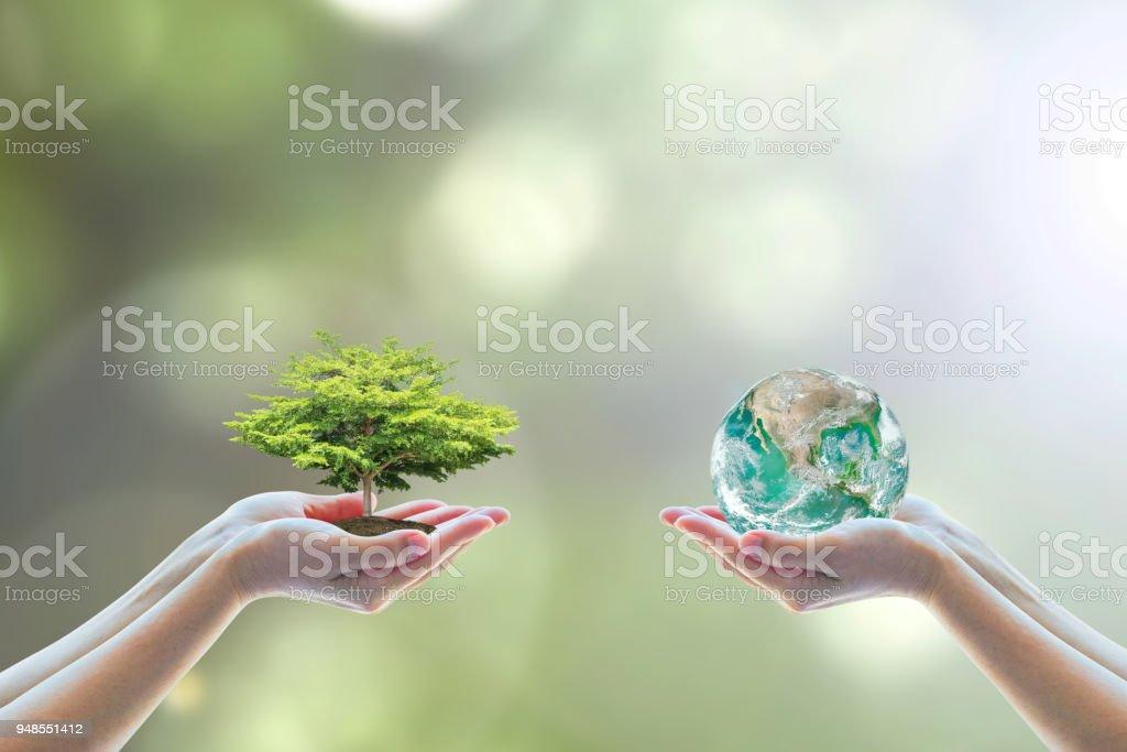 Deux mains humaines de gens holding / enregistrement à propre CSR ESG lumière naturelle du soleil fond environnement la journée mondiale de plus en plus grand arbre sur globe de sol eco bio aller concept vert, élément de l'image fournie par la NASA - Photo