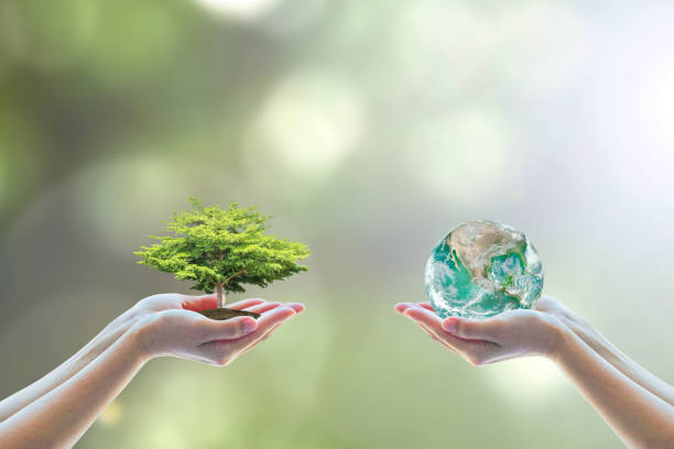 two people human hands holding/ saving growing big tree on soil eco bio globe in clean csr esg natural sunlight background world environment day go green concept element of the image furnished by nasa - environment stock pictures, royalty-free photos & images