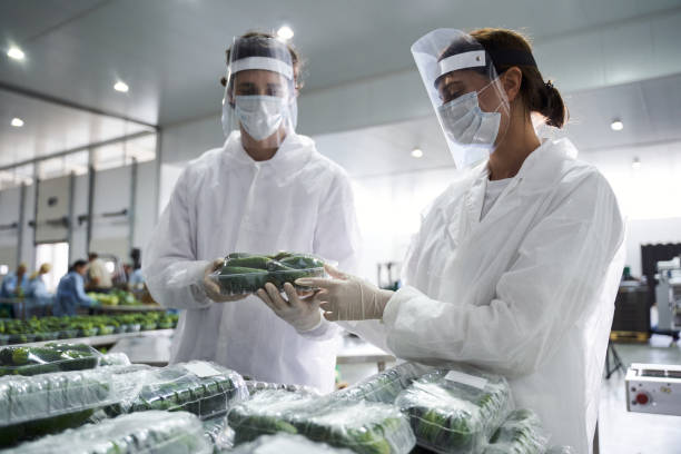Two people performing the packaging quality control stock photo