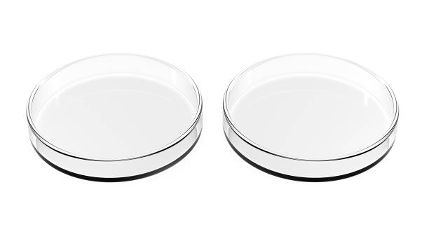 Two petri dishes isolated on white background. Two petri dishes isolated on white background. 3d Illustration. Empty. petri dish stock pictures, royalty-free photos & images