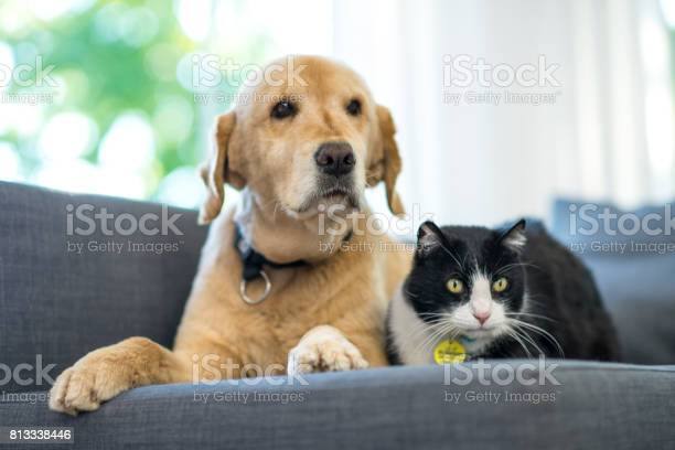 Two pets looking picture id813338446?b=1&k=6&m=813338446&s=612x612&h=tio9rsytsj sslrcijeomeiqzzup 7fvhqhlbrnbcw0=