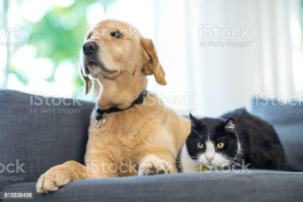 Two pets picture id813338438?b=1&k=6&m=813338438&s=612x612&h=4ve02hkf0q9sijsx8d2yrnf1yjdlhls1ijxgbupxrz8=
