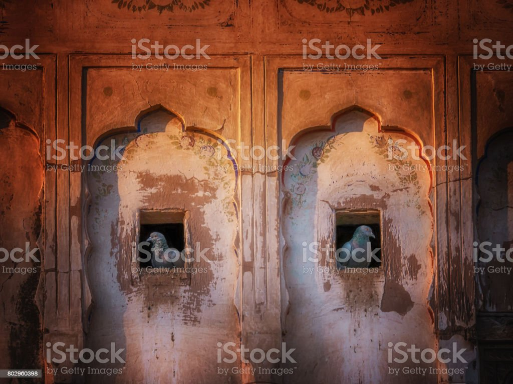 Two pigeons are neighbors, living in holes in abandoned haveli exterior wall in Mandawa, Rajasthan, India. stock photo