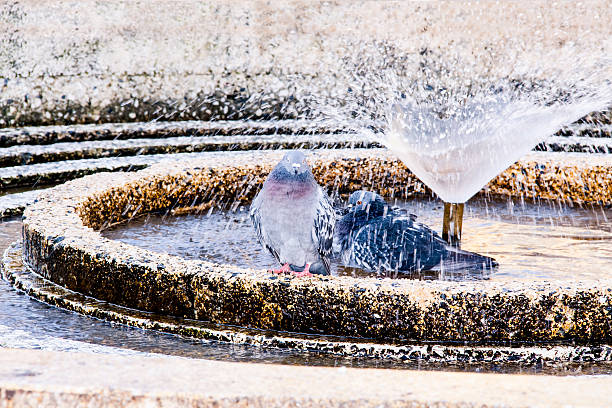 two pigeons standing on a water fountain - freistehende wanne stock-fotos und bilder