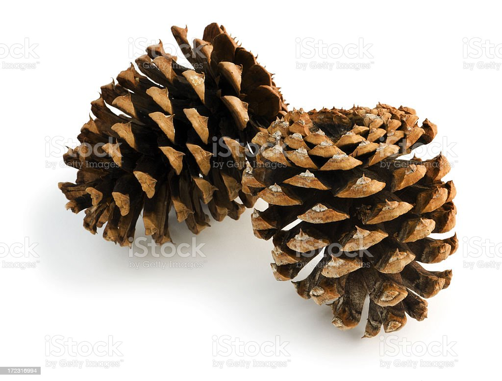 Two Pine Cones Isolated on White royalty-free stock photo