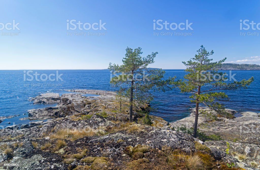 Two pines on the shore of Ladoga Lake. stock photo