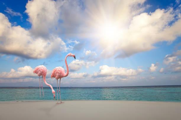 Two pink flamingos on the sandy beach by the blue sea under the sky picture id955385410?b=1&k=6&m=955385410&s=612x612&w=0&h=w teqfxvc6m1odzkpv3n lms30rn4lyq0rxlmogvsge=