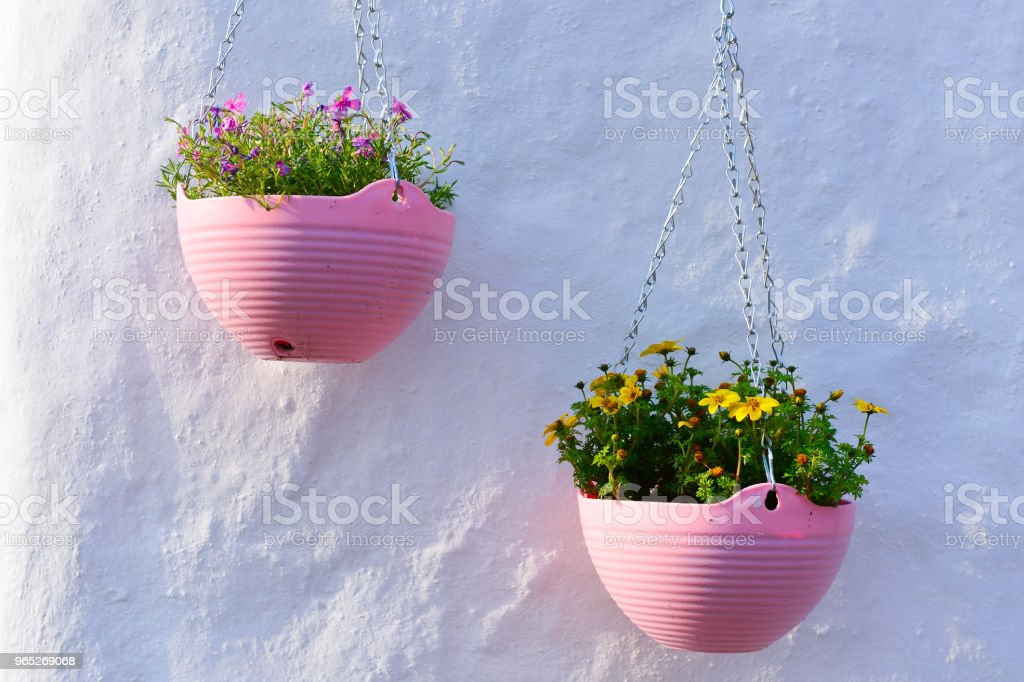 Two pink flowerpots on the white wall royalty-free stock photo