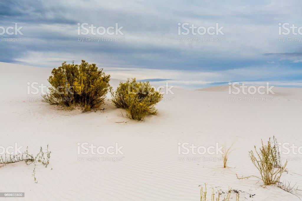 Twee planten op de verbazingwekkende surrealistisch witte zand van New Mexico - Royalty-free Bergrug Stockfoto