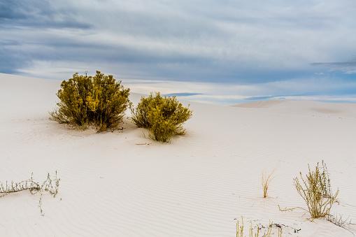 Twee Planten Op De Verbazingwekkende Surrealistisch Witte Zand Van New Mexico Stockfoto en meer beelden van Bergrug