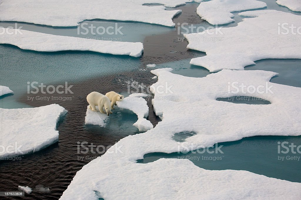 Two Polar Bears On Ice Flow Surrounded By Water Stock Photo