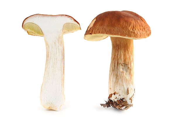 zwei Steinpilz (boletus edulis) - two porcini mushroom Steinpilz (boletus edulis) - porcini mushroom. one bisected pocini mushroom z_wei stock pictures, royalty-free photos & images