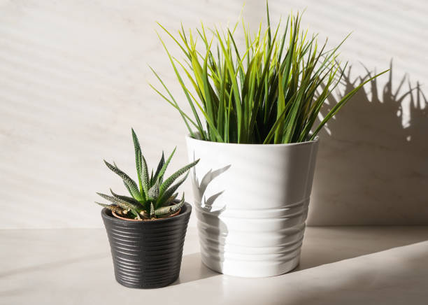 Two potted plant cactus and artificial grass stock photo