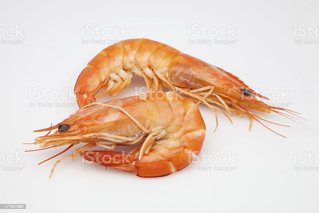 two prawns royalty-free stock photo