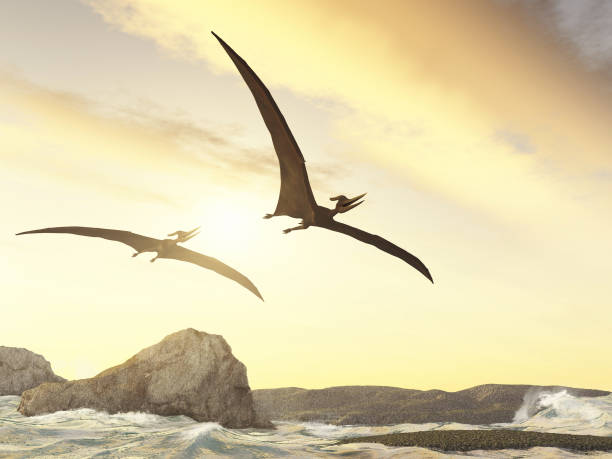 Two pteranodons flying over rocks in the sea stock photo