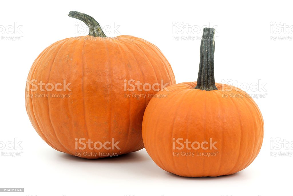 two pumpkins on white background for halloween or thanksgiving stock photo