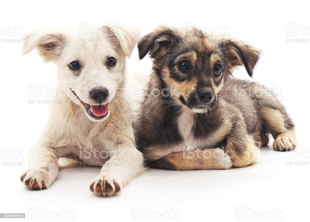 Two puppies. stock photo