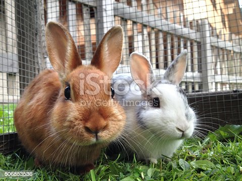 Rabbits in a cage.