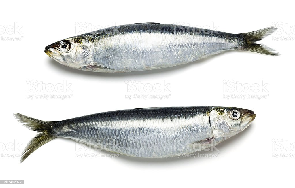 Two Raw Fresh Whole Sardines stock photo