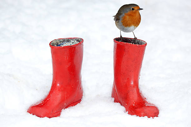 Two Red Boots and a Robin - XXXL stock photo