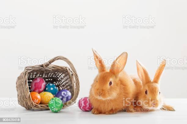 Two red bunnies with easter eggs on white background picture id905425418?b=1&k=6&m=905425418&s=612x612&h=nxsfrzrlvvnigiulln65wdrmze7xgn v yz50xtk07k=