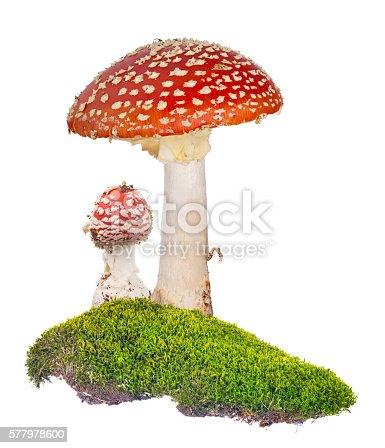 two fly agarics in green moss isolated on white background
