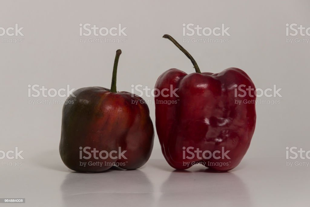 Two red Rocoto - Hot pepper royalty-free stock photo