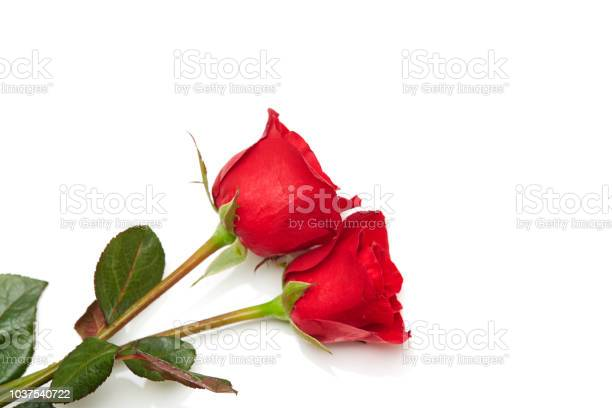 Two red rose on white background love and marriage picture id1037540722?b=1&k=6&m=1037540722&s=612x612&h=s7cmeb6k09bm6niicxqeihsn 8cyxxqat7akbalprq4=