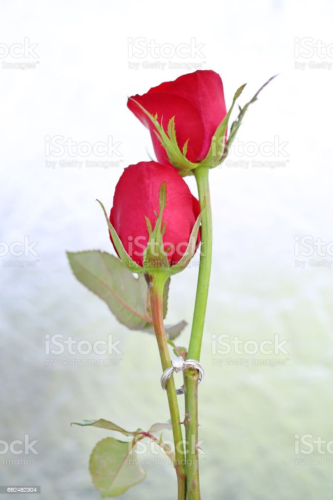 Two Red roses flower with two wedding rings on foil background. royalty-free stock photo