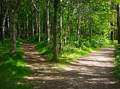 two road in forest