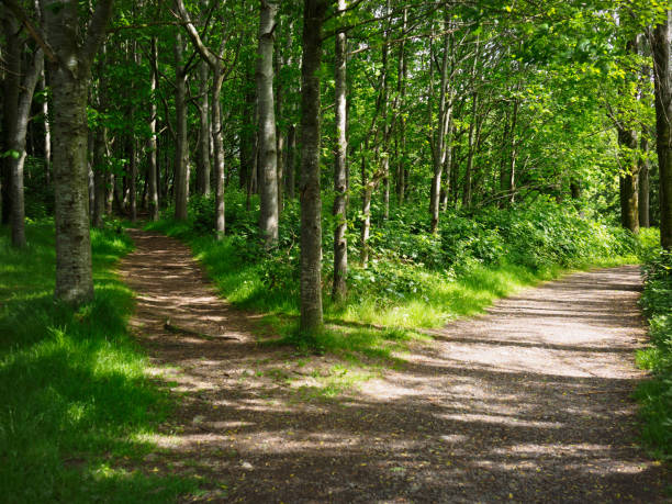 two road in forest two road in forest,Northern Ireland narrow stock pictures, royalty-free photos & images
