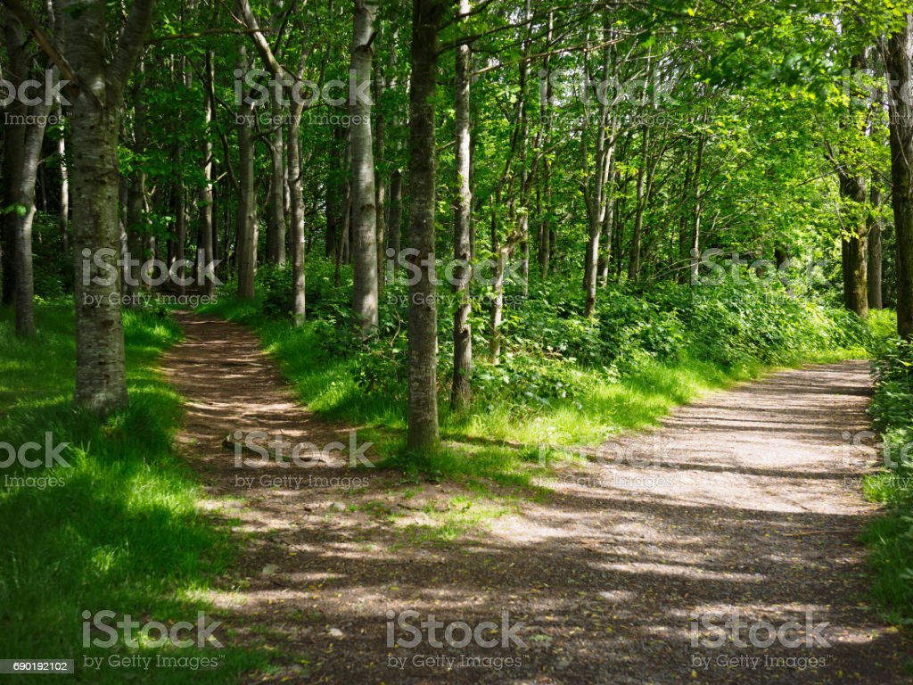 dois estrada na floresta - foto de acervo