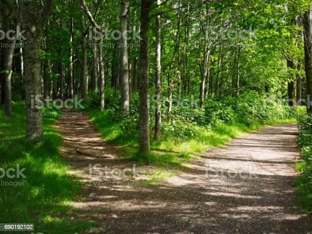 Two Road In Forest - Fotografias de stock e mais imagens de Ao Ar Livre