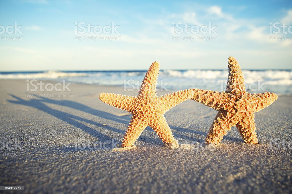Two Romantic Starfish Holding Hands on Tropical Sunset Beach stock photo