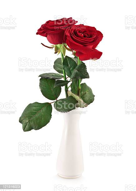 Two roses in a vase picture id121316023?b=1&k=6&m=121316023&s=612x612&h=etzueuoeetjj7m6uncey71f5nfoa4ct5svjhdnnuntw=