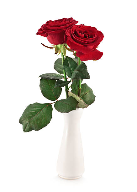 Royalty Free Roses In Vase Pictures Images And Stock Photos Istock