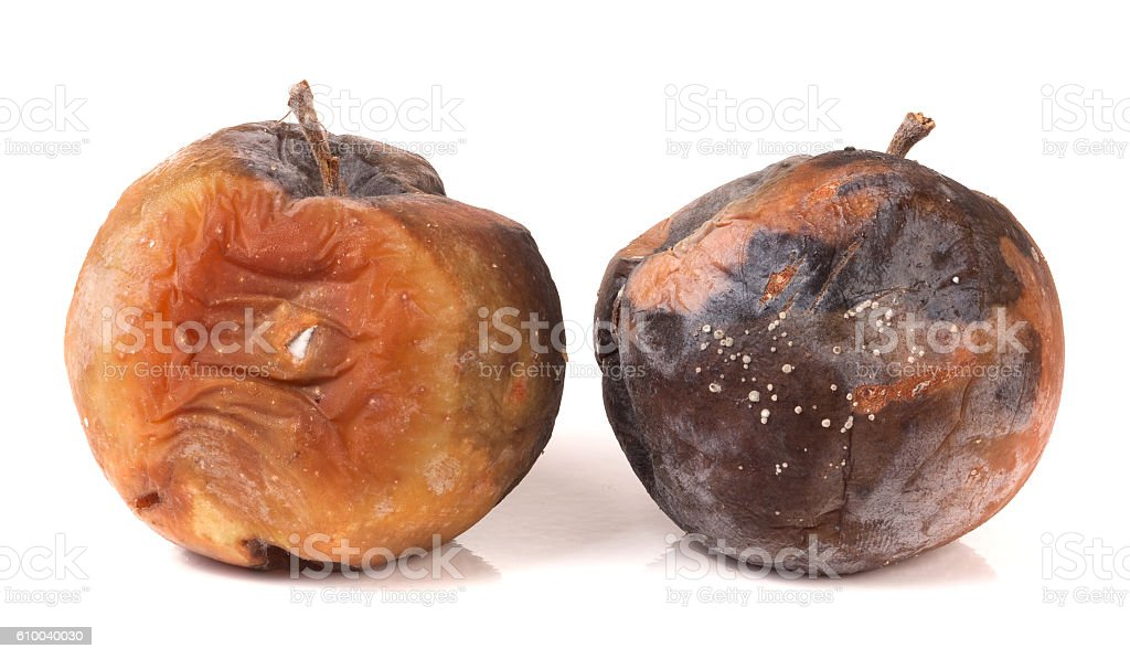 two rotten apple isolated on a white background stock photo