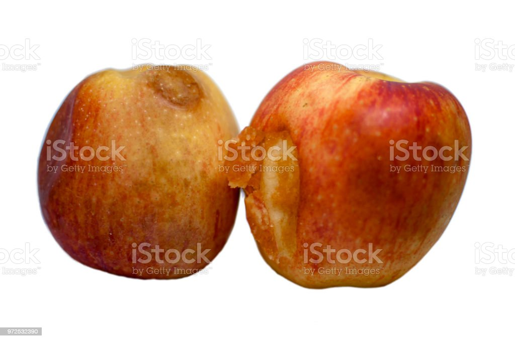 Two rotten apples with pealing skin stock photo
