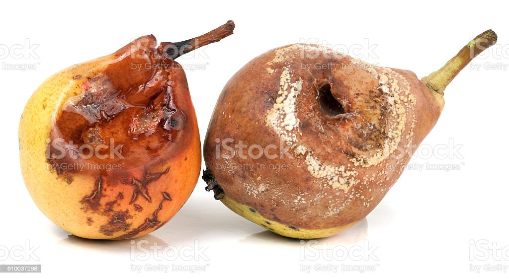 two rotten pears isolated on a white background closeup stock photo