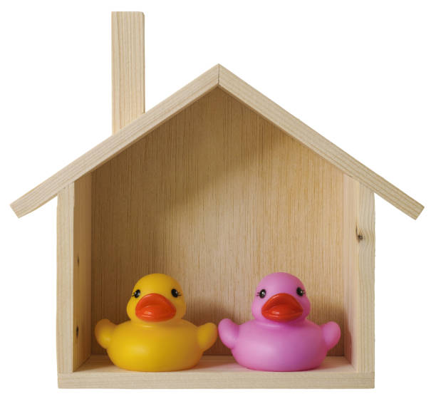 Royalty Free Two Rubber Ducks Pictures, Images and Stock Photos - iStock