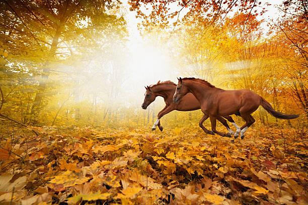Deux chevaux de course - Photo