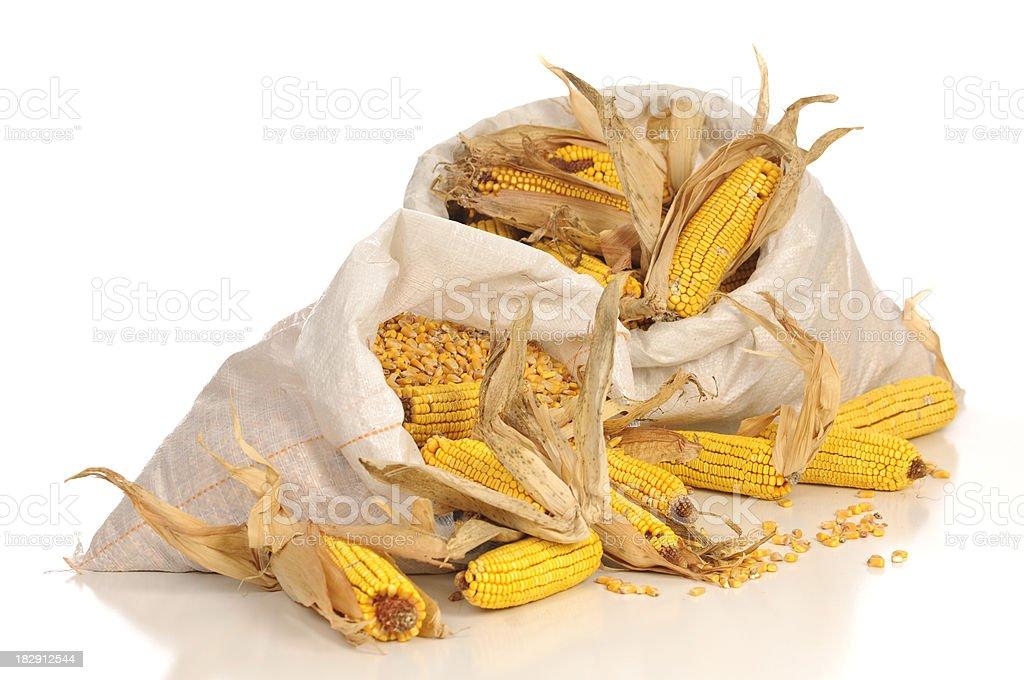 Two Sacks Of Corn On White stock photo