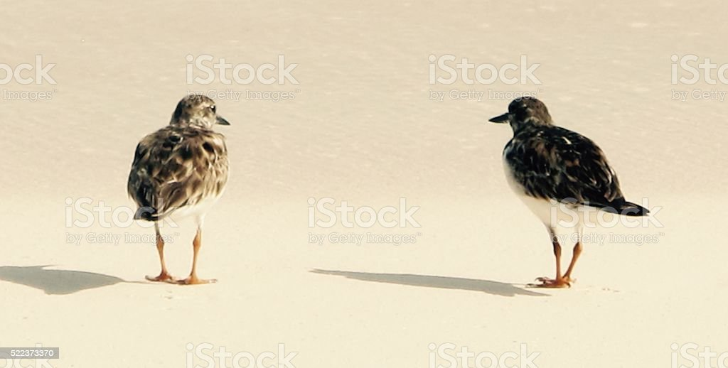 Two Sandpipers stock photo