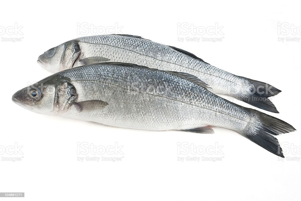 two sea bass isolated royalty-free stock photo