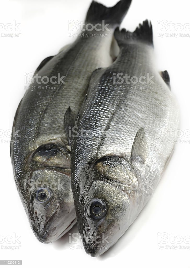 two sea bass royalty-free stock photo