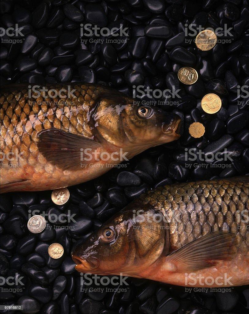 Two Sea Carp with Gold Coins on Rocks 4x5 Film royaltyfri bildbanksbilder