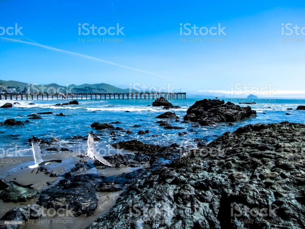 Two Sea Gulls Fly In Front of Pier stock photo